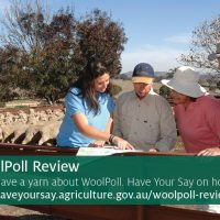 WoolPoll Review