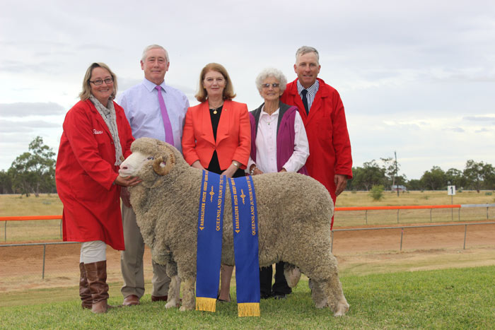 QLD Ram of the year Mt Ascot